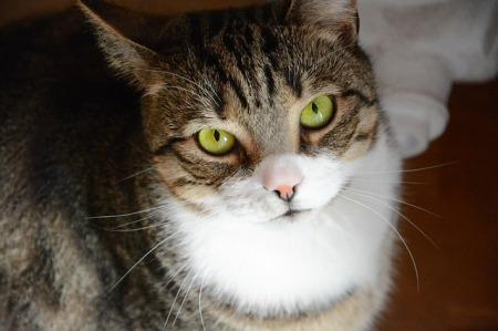 http://maxpixel.freegreatpicture.com/A-Normal-Cat-Tomcat-Pet-Cat-Tabby-Kitten-Charming-1698392
